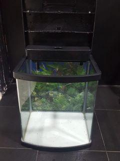 Fish Aquarium / Drift Woods