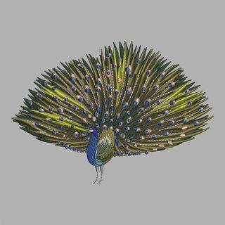 Embroidery Design: Beautiful Peacock