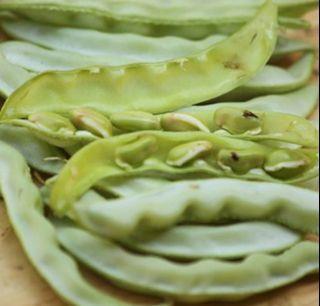 Hyacinth bean / lab lab bean seeds