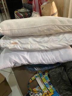 3 Standard Pillows