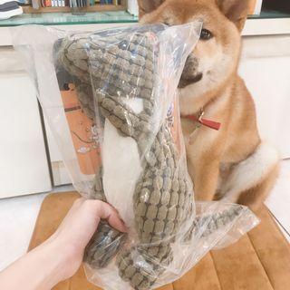 寵物🐶🐱 HOOPET恐龍造型潔齒發聲寵物玩具(中號/高35cm)
