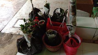 Testimony pembelian tanaman2