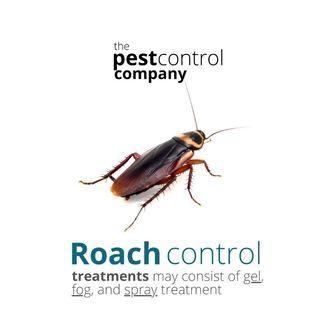Cockroach German American infestation pest control rubbish chute FnB restaurant home hdb condo manhole treatment. Foggin fumigation gel treatment.
