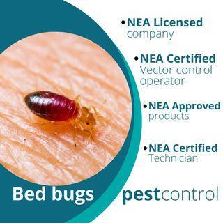 Termite and bedbugs Pest control singapore