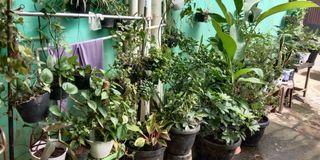 Macam2 tanaman hias indoor outdoor