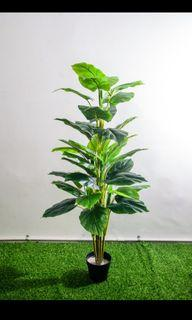 ( Cash on Delivery ) 1.2m  Artificial Plant Money Plant   $58   big leave. Small leave all u can choose   Qxpress $10