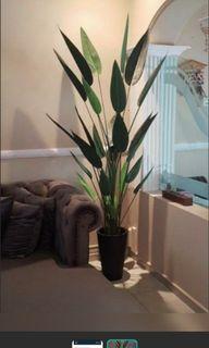 Skgarden   Skybird Artificial Plant   60cm $35   120cm $75   160cm $98   180cm $118   + flower $10   Qxpress $10