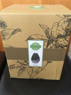 Scentsy Reflect Diffuser Shade with 6 Fragrance Wax Melts