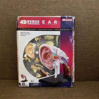 4d Master Puzzle Assembling Toy Human Body Organ Ear Canal Anatomy