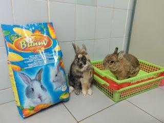 [Briter Bunny] Genki Usagi - Rabbit Pellet food
