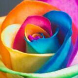 rainbowparadise