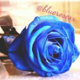 bluerosesx