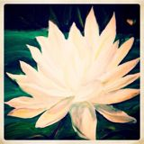 whitewaterlily