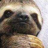 slothguy