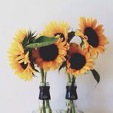 sixteensunflowers