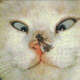 katty1434