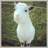 happi.goat