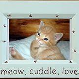 kitty_sells