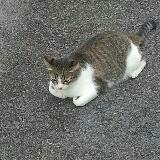 notagingercat