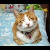 kittybeeboo