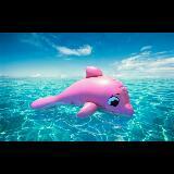 pinkdolpin