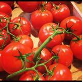 tomato.paste