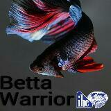 betta_warriors_pte.ltd.