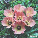 micarol