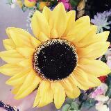 sunflowerirene
