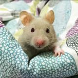 hamsterloots