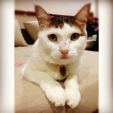 beckycat