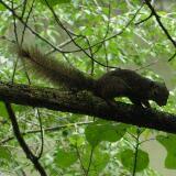 squirrelfamily