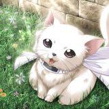 meow13