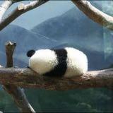 rocking_panda