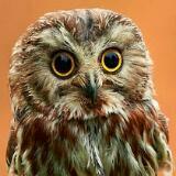 owlesymphony