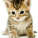 felineface