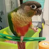 avocadodobird