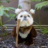 fop_the_panda