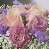 vitrescent.violet