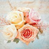 pinkbell