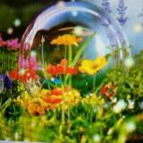 sweetspring