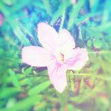 saphir_beaute