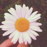 iheartdaisies
