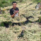 pudin_zaid