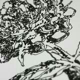 greenylines
