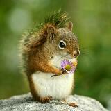squirrel000