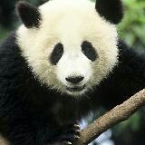 bamboogreen