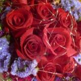 rosyroses