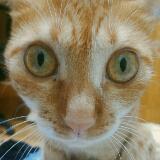 kitty9408