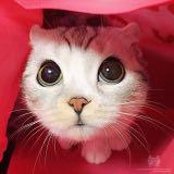 zen_cat_toy_store